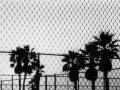 palmTrees_venice_1994